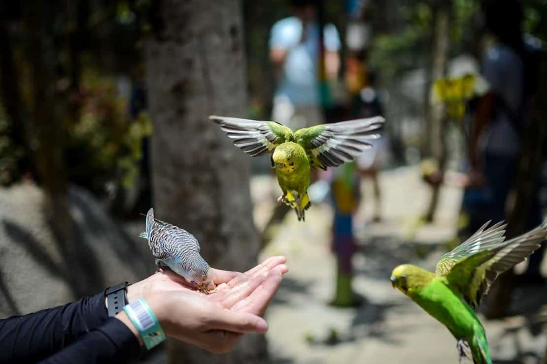 Bird Bromelia Pavilion 2